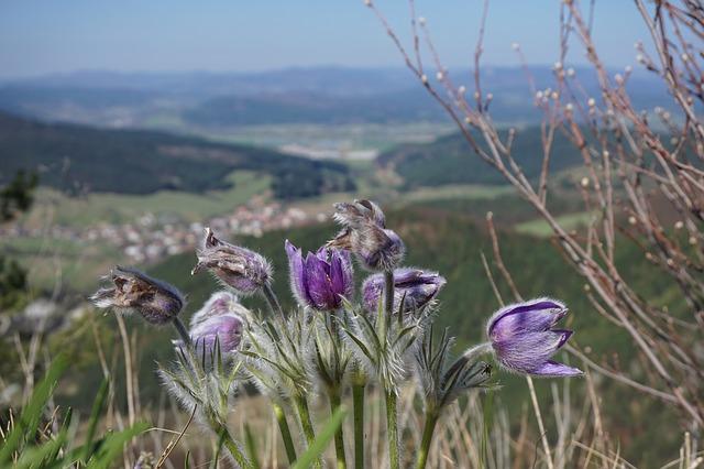 fialové květy.jpg