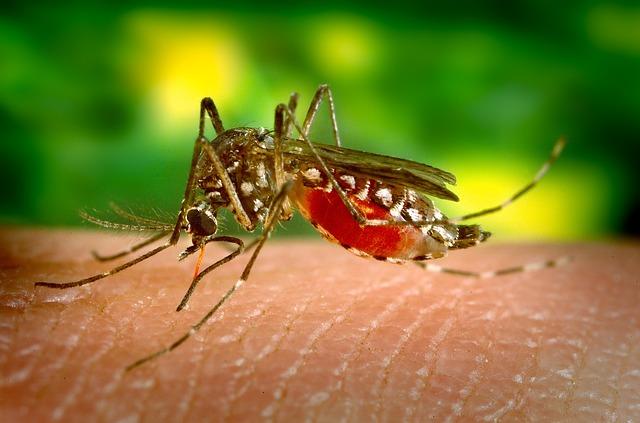 píchnutí komáru.jpg