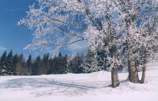 Zasnežená krajina a strom so zamrznutými konármi.jpg